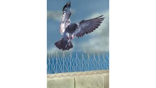 Bird Spike 2001