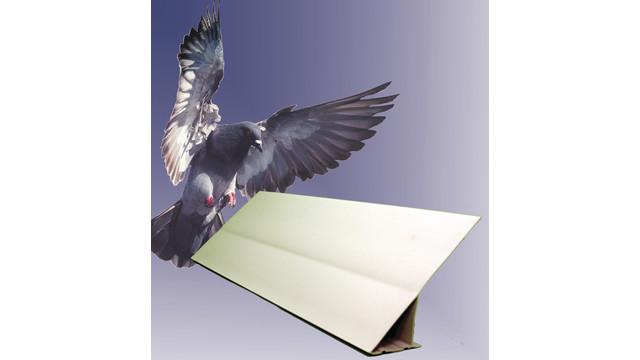 Bird Slope