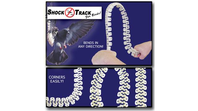 shocktrackforbirds_10067363.tif
