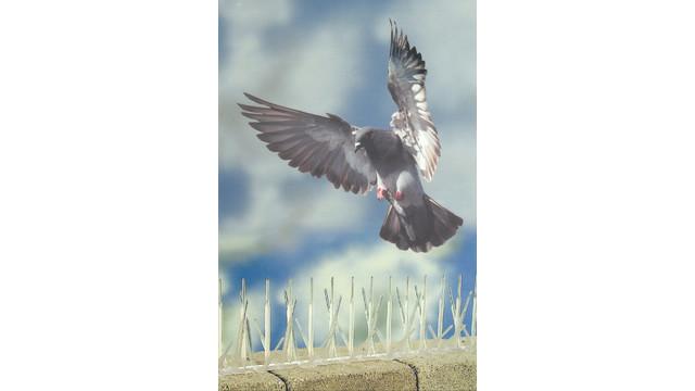 plasticbirdspikesmadefromrecycledmaterial_10067616.psd