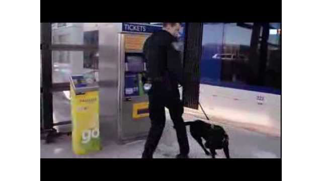 Meet Alex & Merle: Part of Metro Transit's K-9 Unit